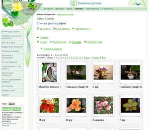 Клуб 'Комнатные растения'